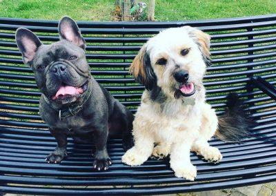 scoobies doggy daycare bench (1)