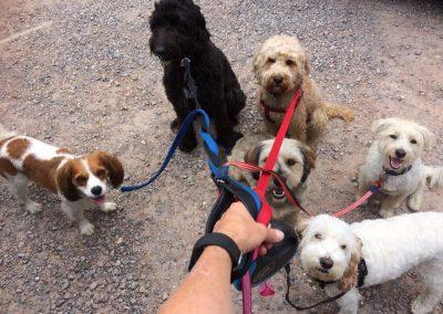 dogs on lead scoobies